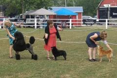 Kars dog show