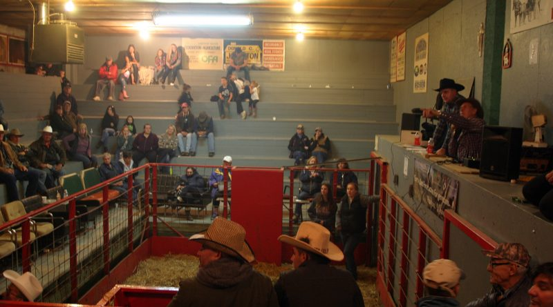 The annual Thanksgiving Horse Sale at Galetta Livestock was a popular spot for horse lovers on Oct. 7. Photo by Jake Davies
