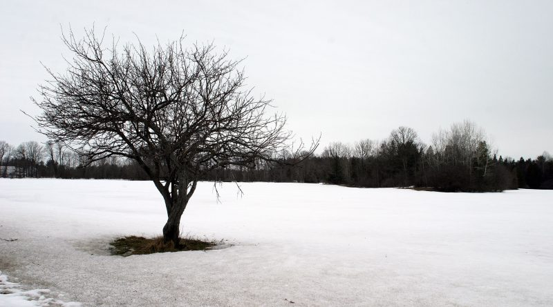 There was still lots of snow on the ground April 7 as this photo taken near the Galetta Side Road shows, but it might be all gone by the time rain is done. Photo by Jake Davies