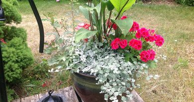 Put your plants in a pot this season. Photo by Anne Gadbois