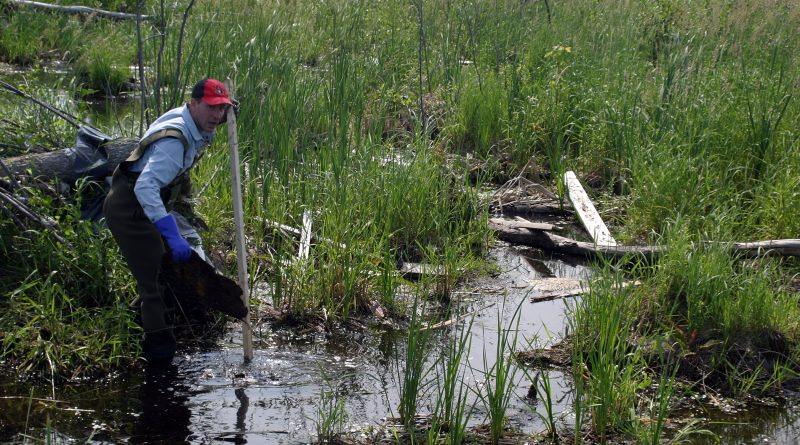 Regular clean-up crew member Jason Moshonas tries to stay dry while combing the swamp for debris Saturday. Photo by Jake Davies
