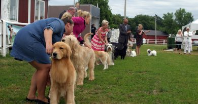Around 1,200 dogs came out to the Kars Dog Club All-Breed Conformation Show held in Carp last weekend. Photo by Jake Davies