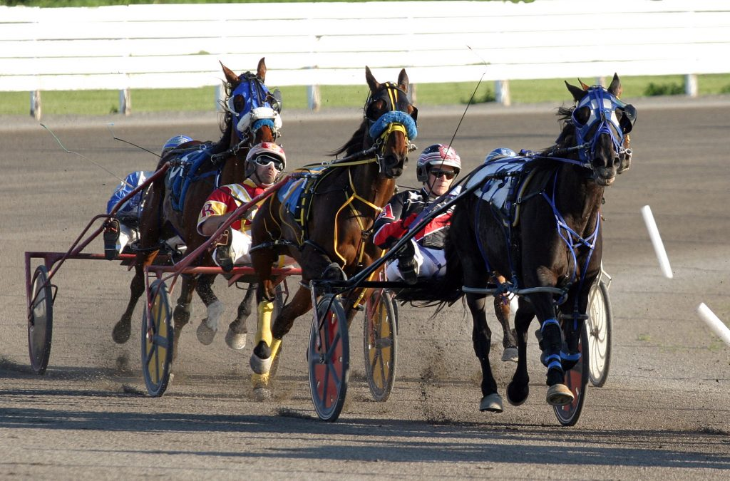 West Carleton Online's Horse Week featured two stories including the story of Silverado (above), a standard bred showing great promise on the track at Rideau Carleton Raceway. Photo by Jake Davies