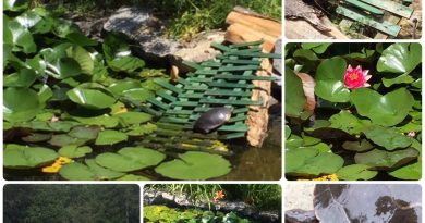 Some photos of Anne Gadbois' pond and her friend Lewis. Photo by Anne Gadbois