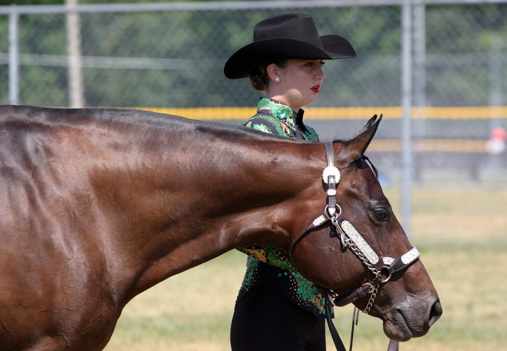 Taylor Carney and Raleigh, of Kitchener prepare for their showmanship class at the EOQHA Summer Sizzler. Photo by Jake Davies