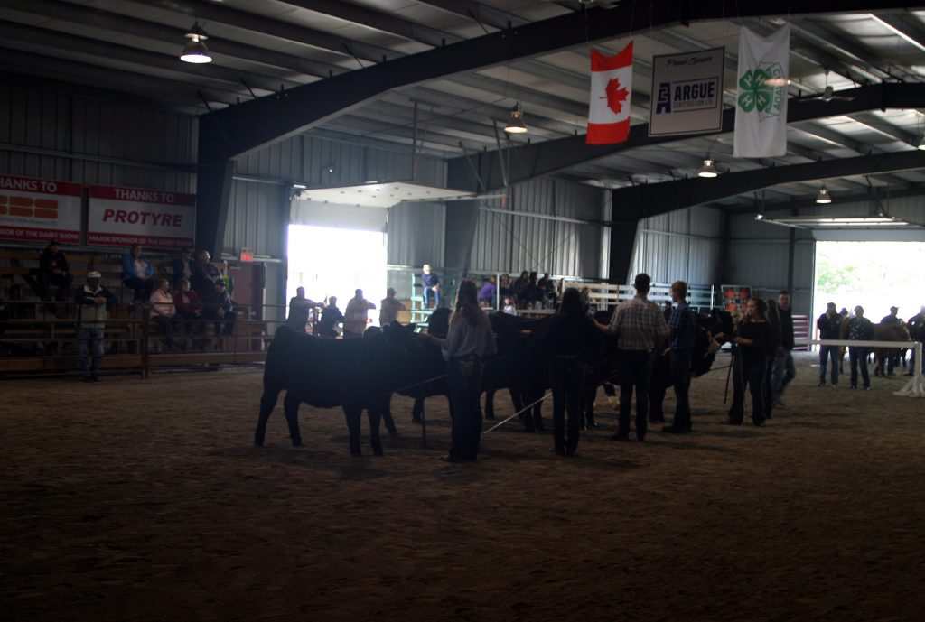 """The Showmanship Contest was full of """"excellent young kids."""" Photo by Jake Davies"""