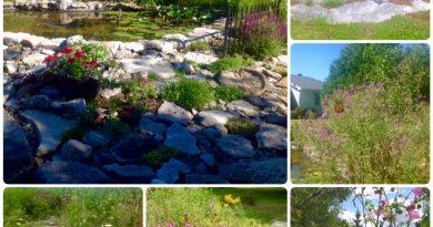 Some examples of rewilding from our garden columnist Anne Gadbois' own garden. Photo by Anne Gadbois
