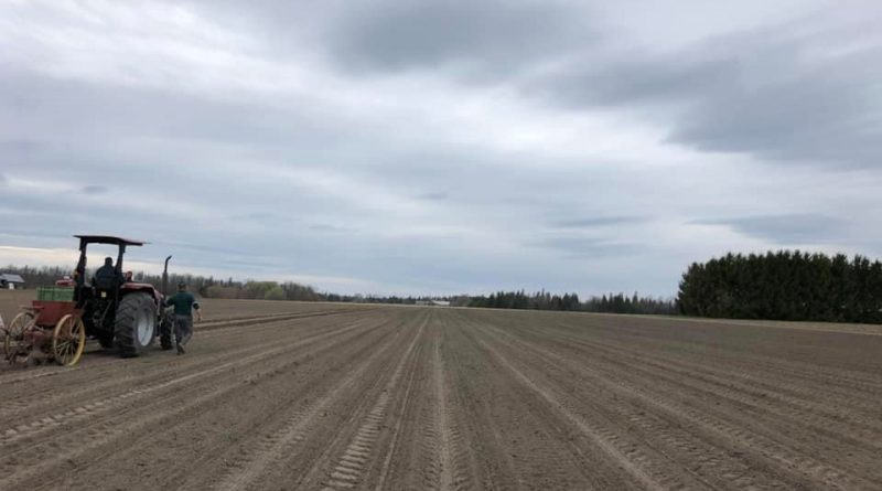The Hudson's started planting their potatoes yesterday. One person sits on the potato planter and feeds the seeds into the planter so there are nice even rows, while another drives the tractor very slowly. Courtesy Hudson's Farm