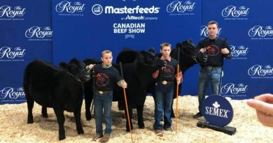 At last year's event, Kinburn's Elm Holme Cattle Company brought home two championship ribbons from The Royal. From left are Jack Findlay, Calahan Findlay and Corbin McCord at last year's event. Courtesy Abigail Argue-Findlay