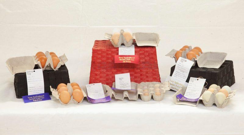 Eggs judged for the Carp Fair Showcase