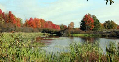 MVCA chair Janet Mason feels new changes to the conservation authorities' powers could spell doom for sensitive wetlands such as these in the Carp Hills. Photo by Jake Davies