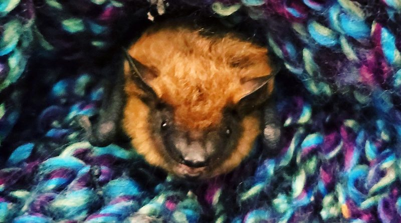 A photo of an orphaned bat.