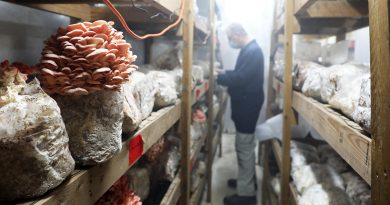 A photo of the pink oyster mushroom with John Bakker in the background.
