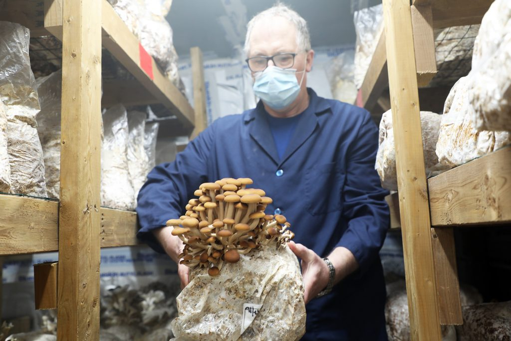 John shows off the pioppino mushroom.