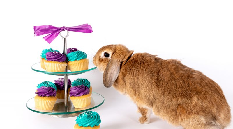A bunny sniffing some cupcakes