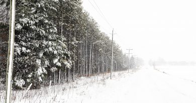 A photo of snow covered trees along Mohr's Road.