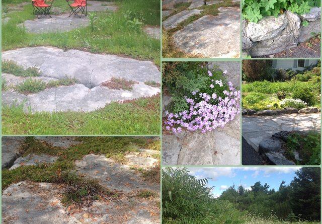 A collage of photos of Anne Gadbois' garden.