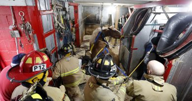 Ottawa firefighters lift a horse using pullies.