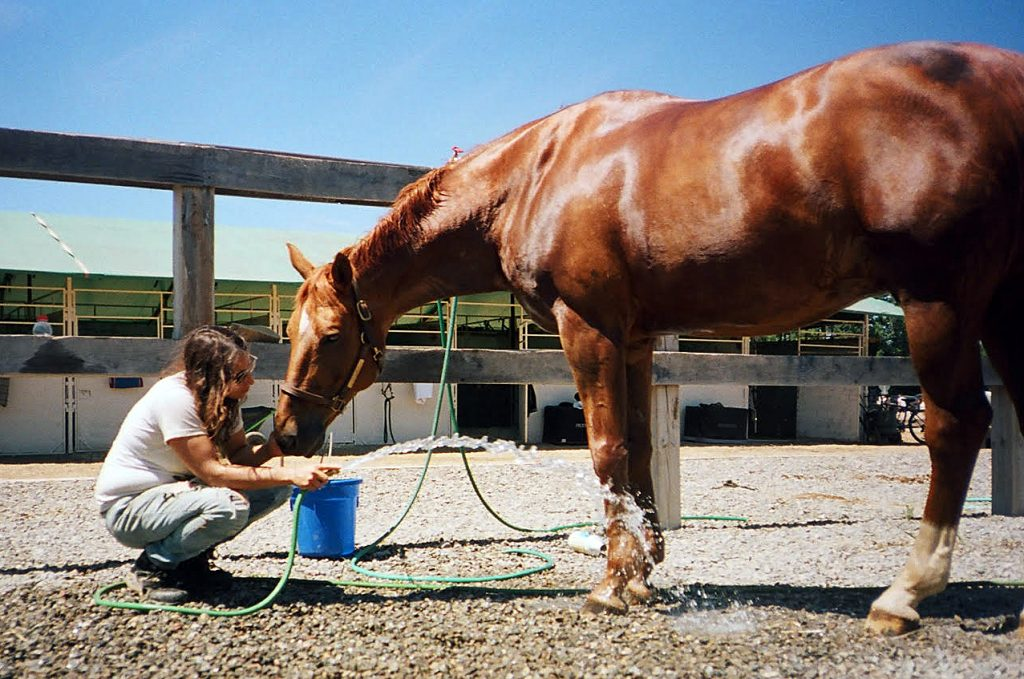 Smith gives a horse a bucket of water.