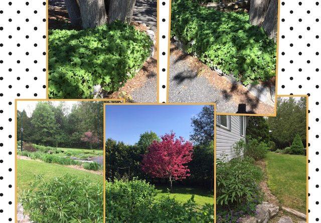 Several photos of Anne Gadbois' garden.