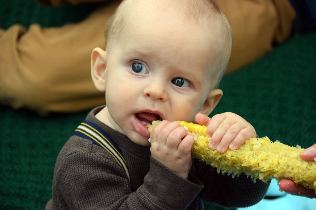 A baby eats some corn.